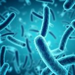 signs of recovery from typhoid fever