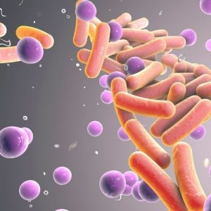 laboratory diagnosis of typhoid fever